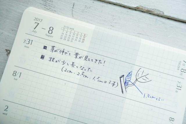 0731sakura1